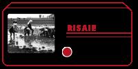 Risaie