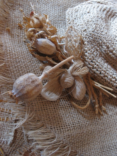 Il ciclo di coltivazione della canapa