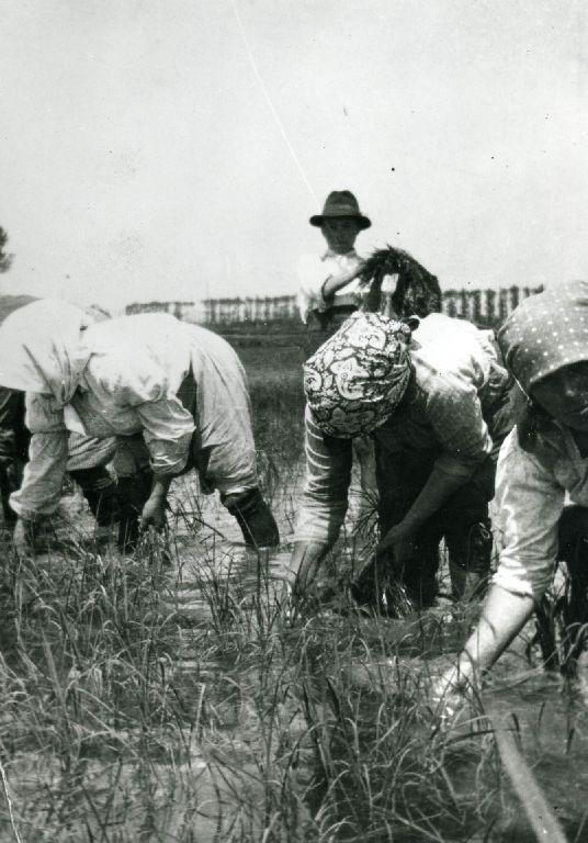 Trapianto del riso effettuato da un gruppo di mondine