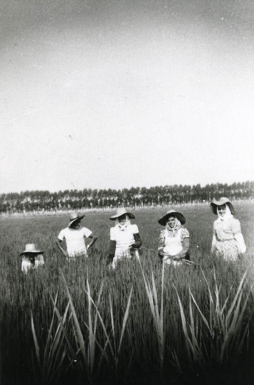 Lavoratori in posa in un campo di riso
