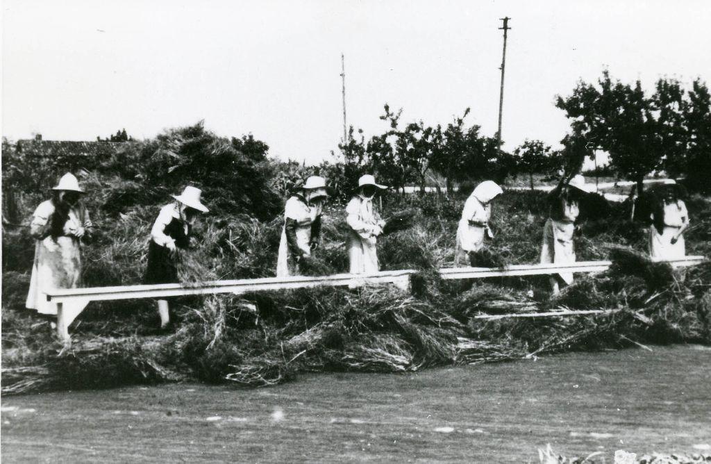 Gruppo di donne intento nella battitura del riso per liberare le sementi dalla pianta