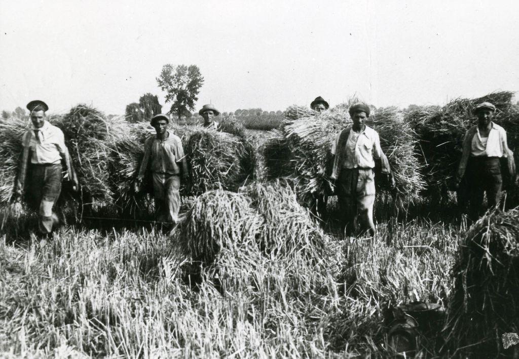 Portantini che trasportano covoni di riso  tramite barelle