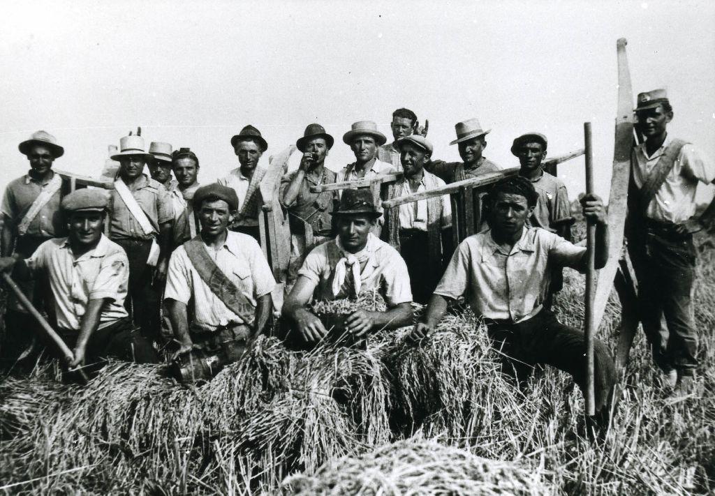 Portantini addetti al trasporto dei covoni di riso