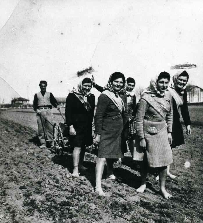 Gruppo di donne (in primo piano, a destra Sambra Eleonora, al centro Guidi Edera, a sinistra Veronesi Vanda, a destra Veronesi Giordana e Bergonzoni Idilia) che trainano una seminatrice meccanica guidata da Gallani Filippo