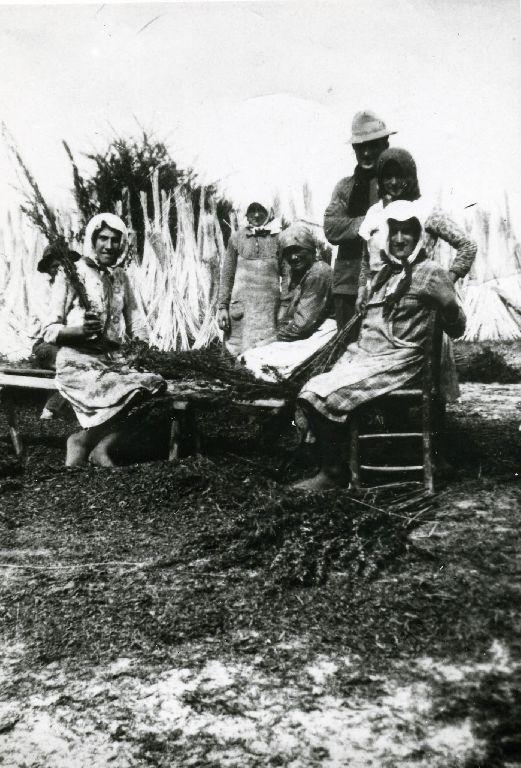 Gruppo di lavoro intento alla raccolta del seme della canapa effettuato battendo le cime dello stelo; sullo sfondo le mannelle di canapa macerata poste in forma di cono per l'essiccazione.