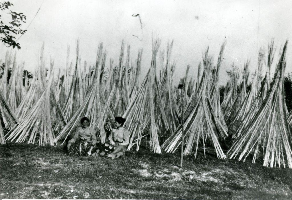 Distesa di mannelle di canapa poste sul campo in coni per l'asciugatura dopo la macerazione; le due donne sono riprese in un un momento di pausa del lavoro.