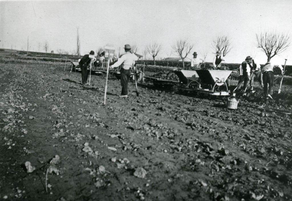 Braccianti intenti nel lavoro di sistemazione del terreno e del quadro di riso, attraverso il trasporto di terra tramite carrelli su rotaie