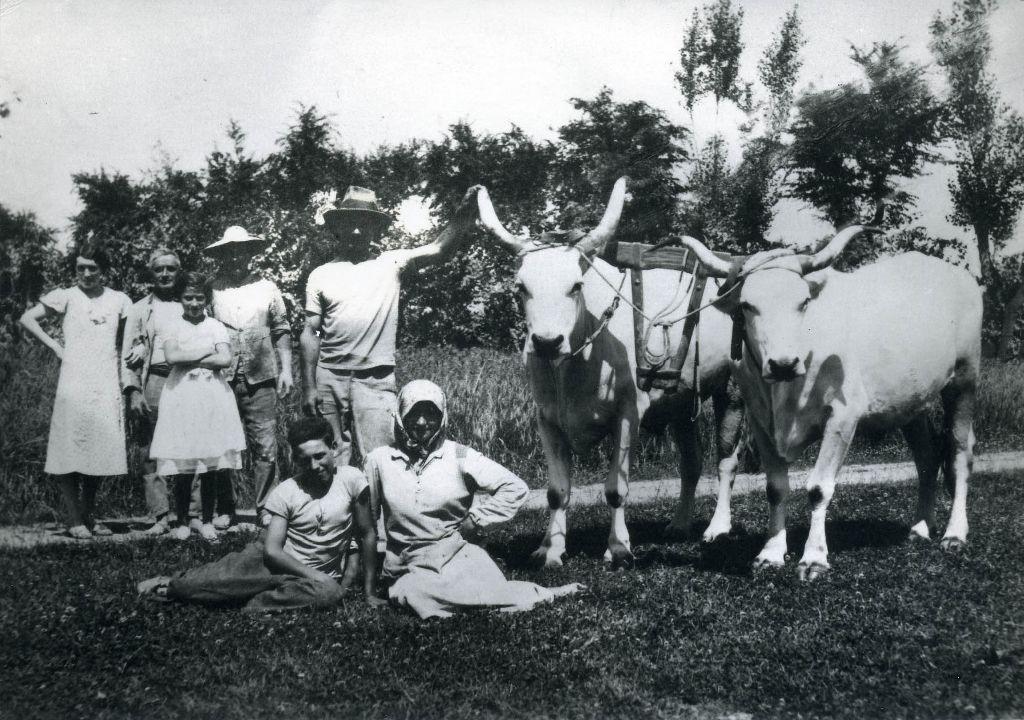 Gruppo di lavoro composta da uomini e donne, e due buoi con giogo montato.