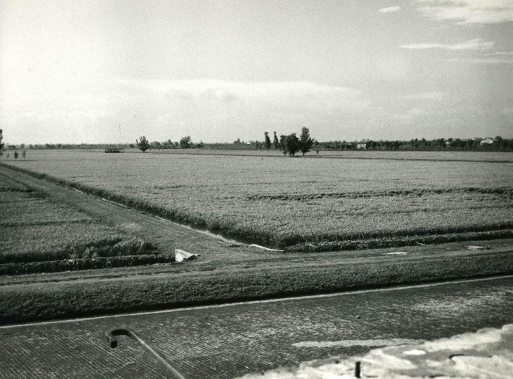 Panorama di risaia: quadre, carreggiata di servizio per trasporto, fossi per l'alimentazione e lo scolo, pioppi per punti ristoro